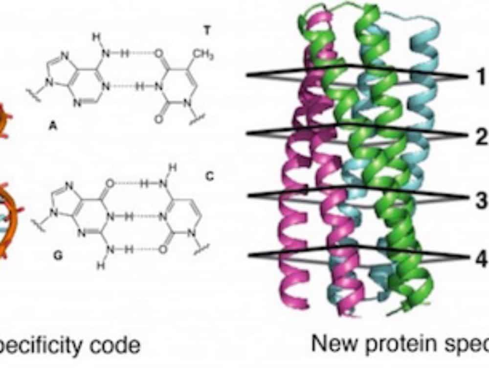 Adding modular hydrogen-bond networks to protein design