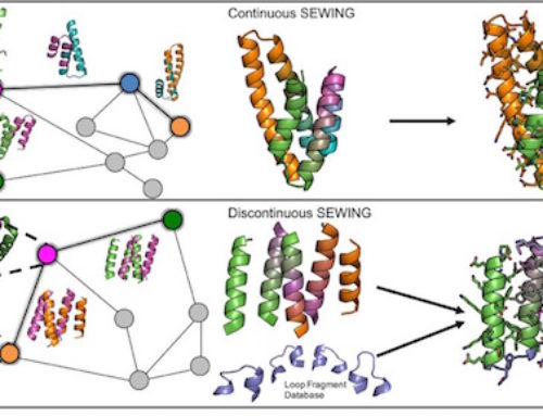 Designing novel protein backbones through digital evolution
