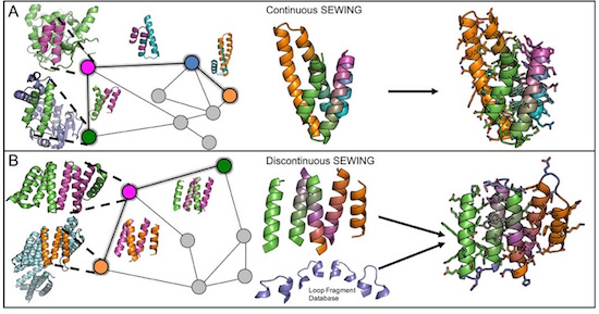 Overview of the SEWING method. Each panel, from left to right: parental structures with extracted substructures; Graph schematic - colored nodes indicate substructures contained in final design model, superimposed structures show structural similarity indicated by adjacent edges; Design model before sequence optimization and loop design; Final design models. Credit: Jacobs et al.