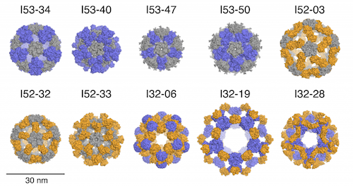 Ten designs spanning three distinct icosahedral architectures. Credit: Baker laboratory, Institute for Protein Design, University of Washington