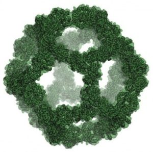 The design model of the icosahedral nano-cage shows its large, empty volume. UW Institute for Protein Design